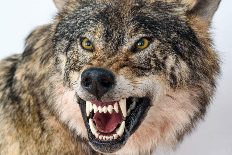 飼い犬を獣と言われました